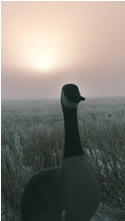 DropZone in the fog-  decoy is looking good